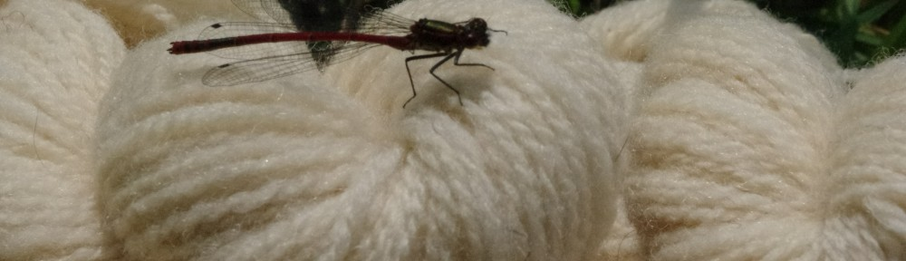 Damselfly on Merino